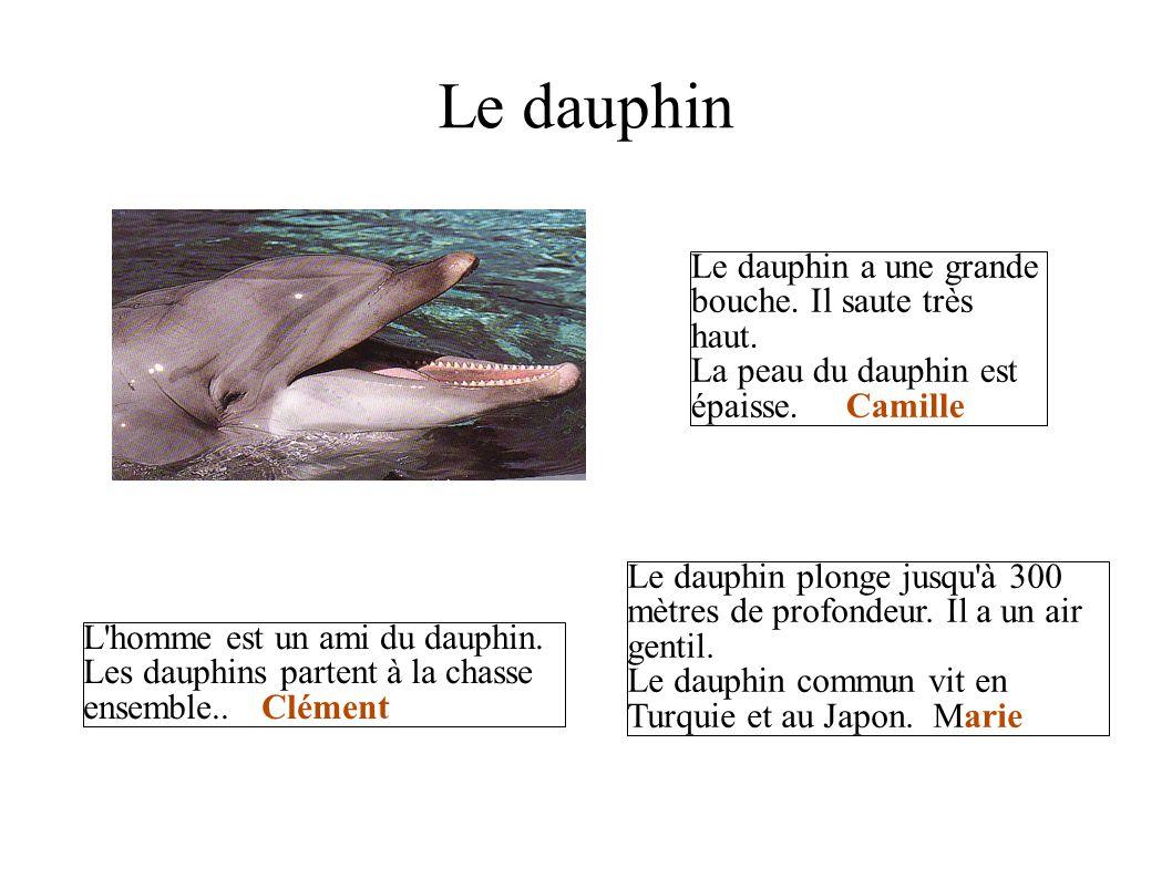 Le dauphin Le dauphin a une grande bouche. Il saute très haut.