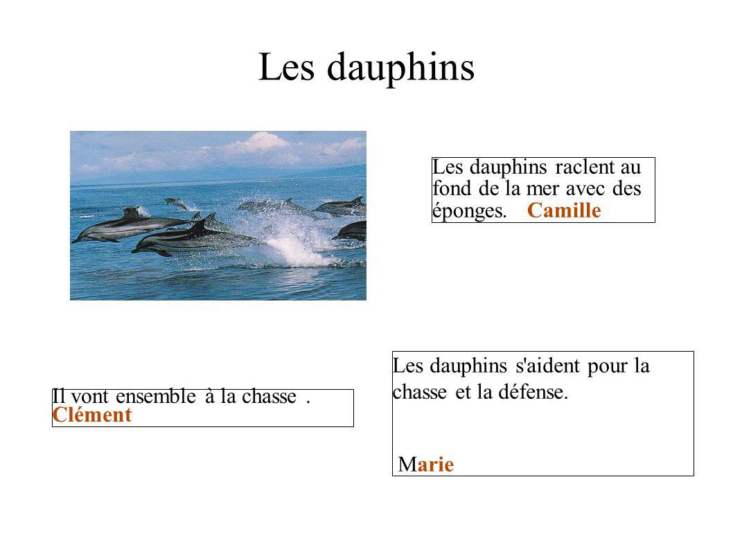 Les dauphins Les dauphins raclent au fond de la mer avec des éponges. Camille. Les dauphins s aident pour la chasse et la défense.