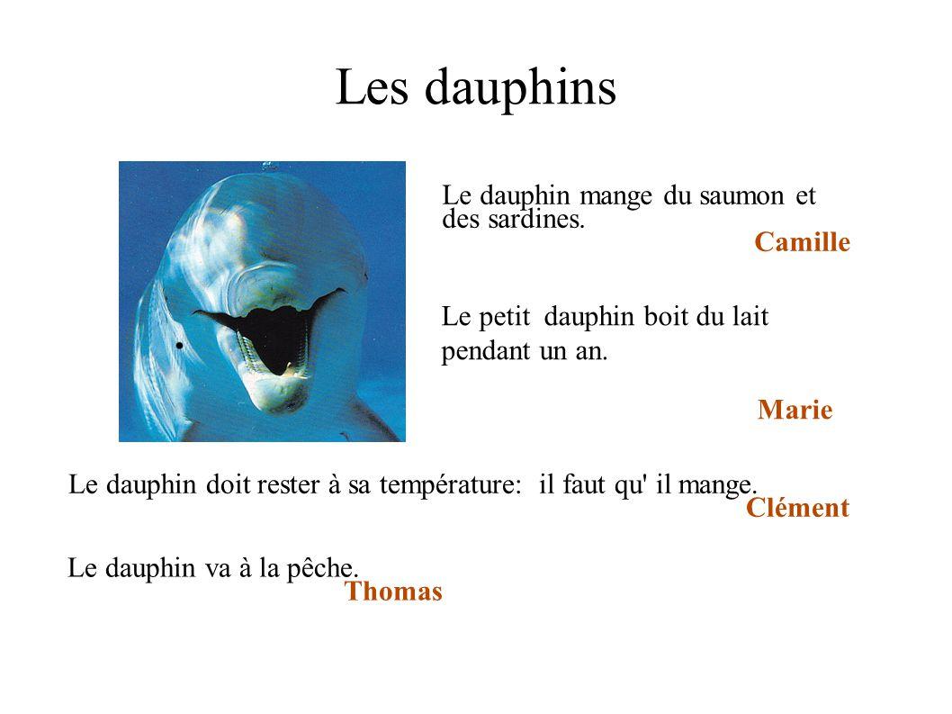 Les dauphins Le dauphin mange du saumon et des sardines. Camille