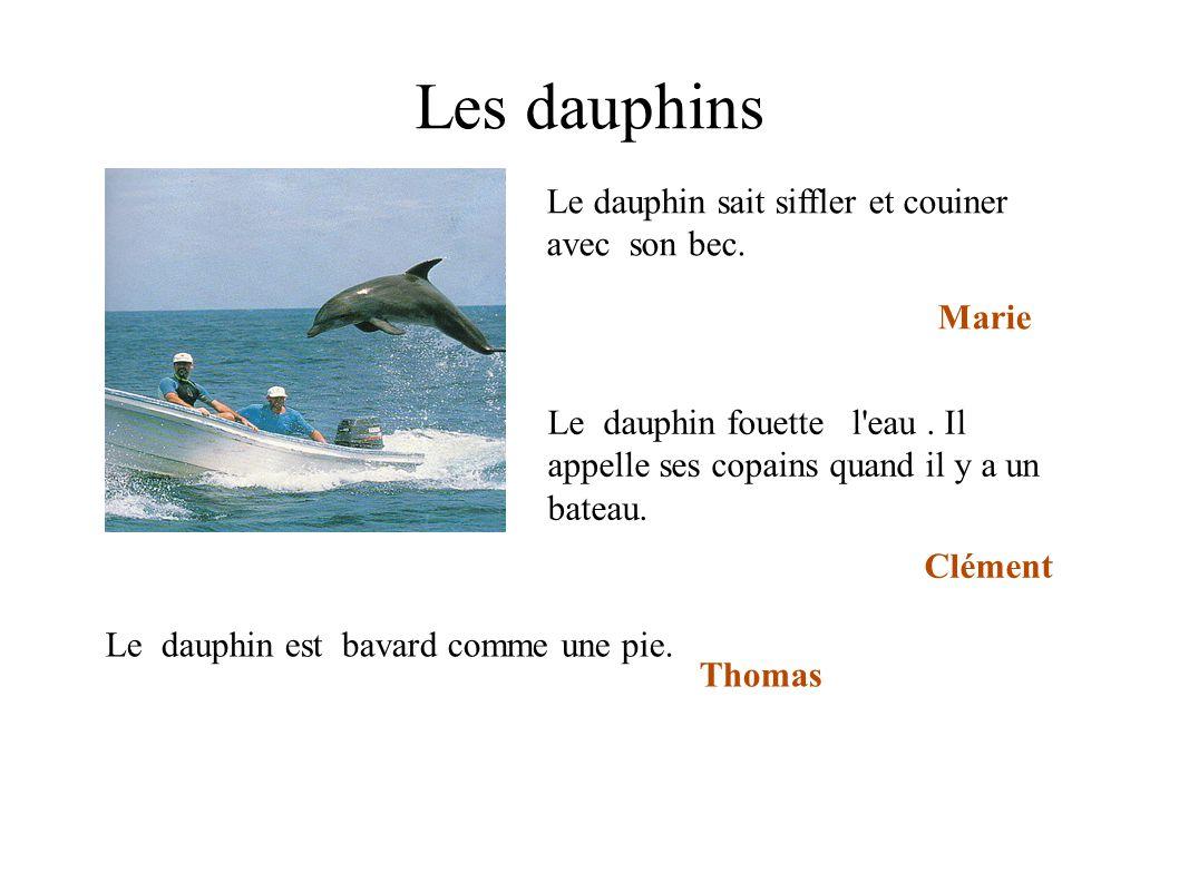 Les dauphins Le dauphin sait siffler et couiner avec son bec. Marie