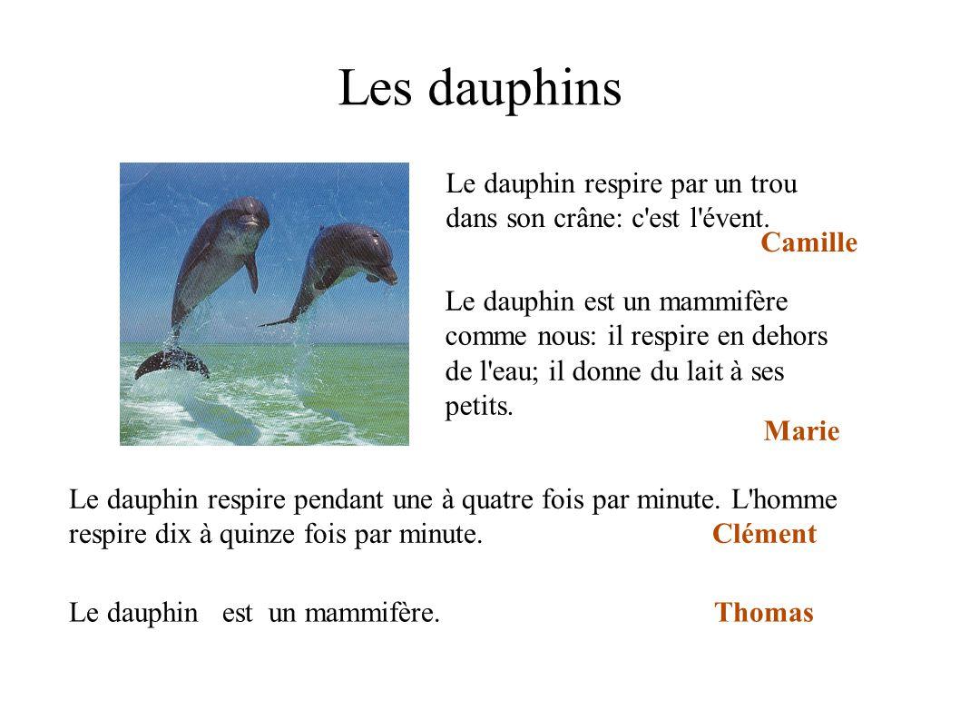 Les dauphins Le dauphin respire par un trou dans son crâne: c est l évent. Camille.