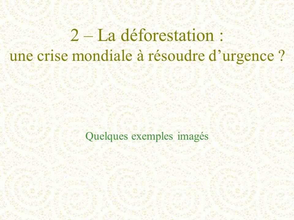 2 – La déforestation : une crise mondiale à résoudre d'urgence