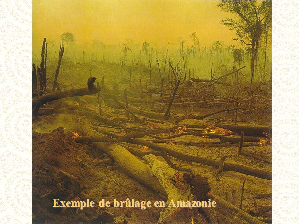 Exemple de brûlage en Amazonie