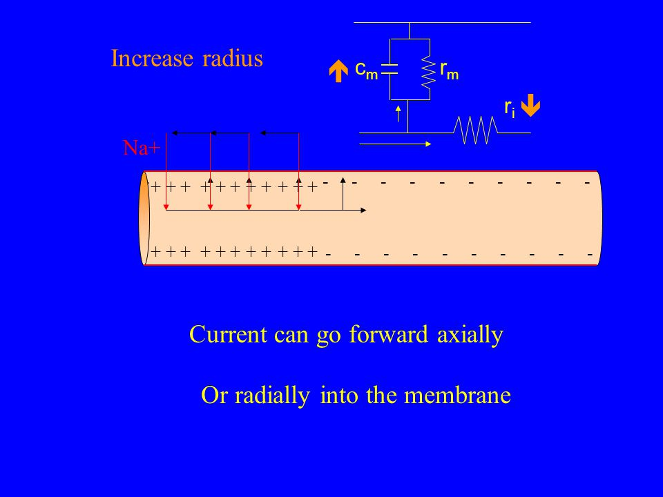 Or radially into the membrane Current can go forward axially