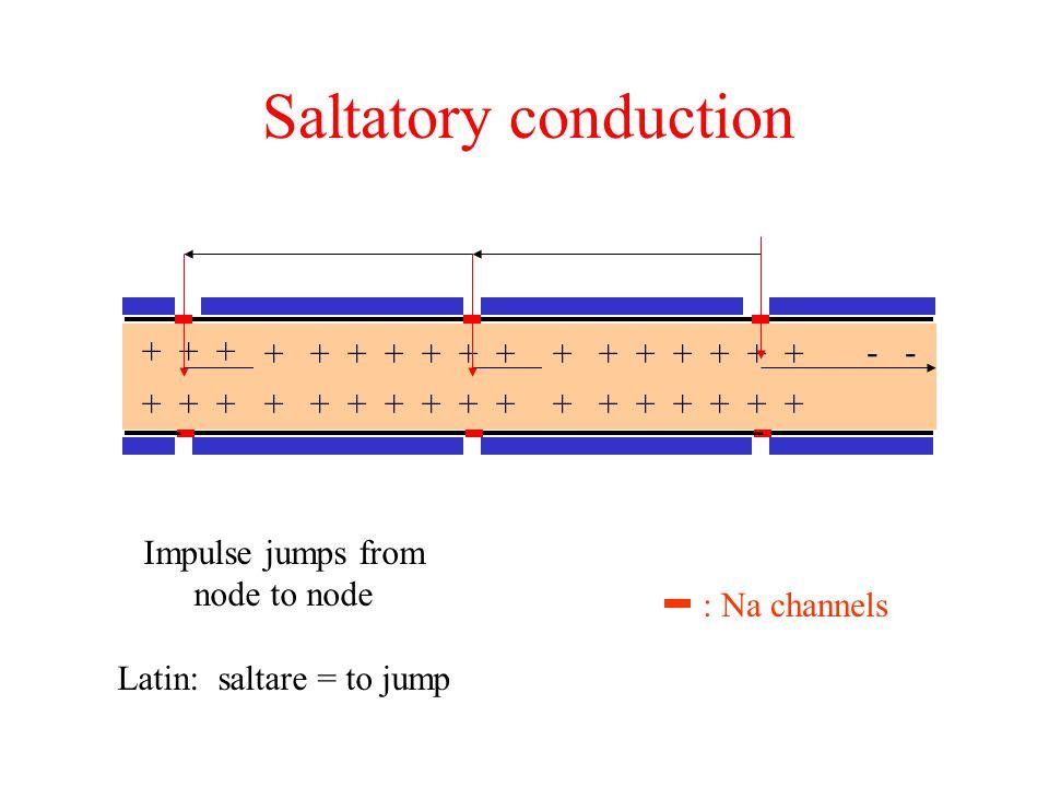 Latin: saltare = to jump