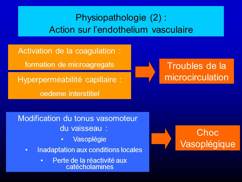 Physiopathologie (2) : Action sur l'endothelium vasculaire