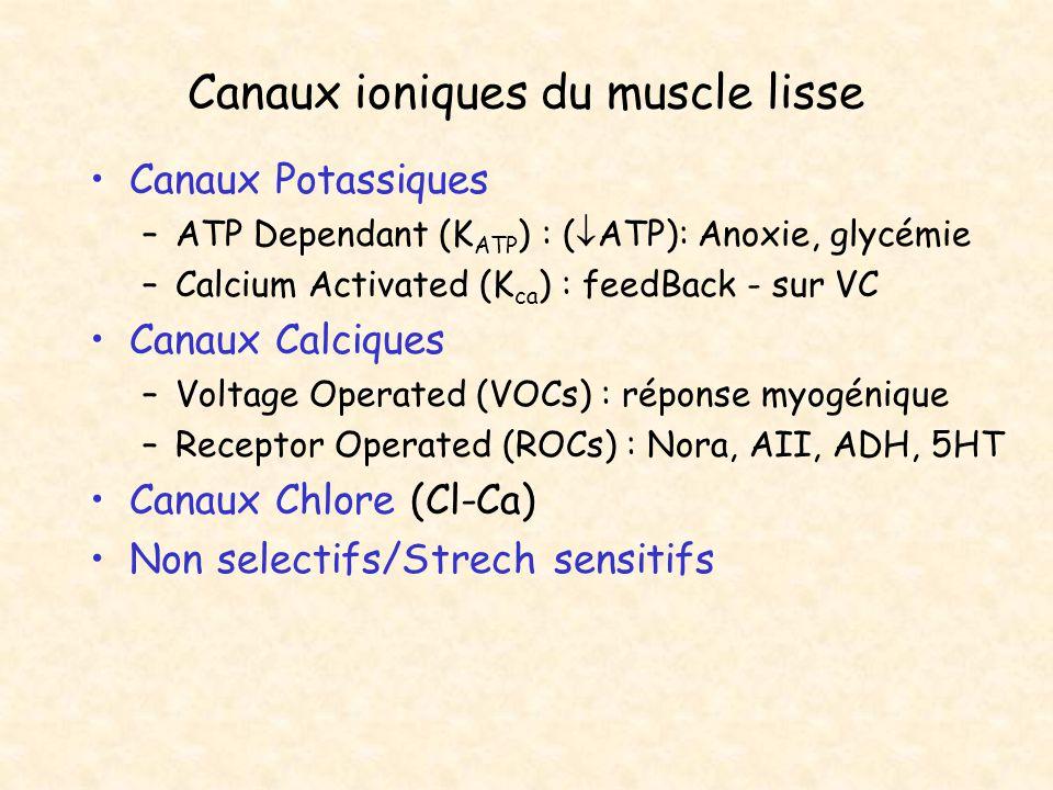 Canaux ioniques du muscle lisse