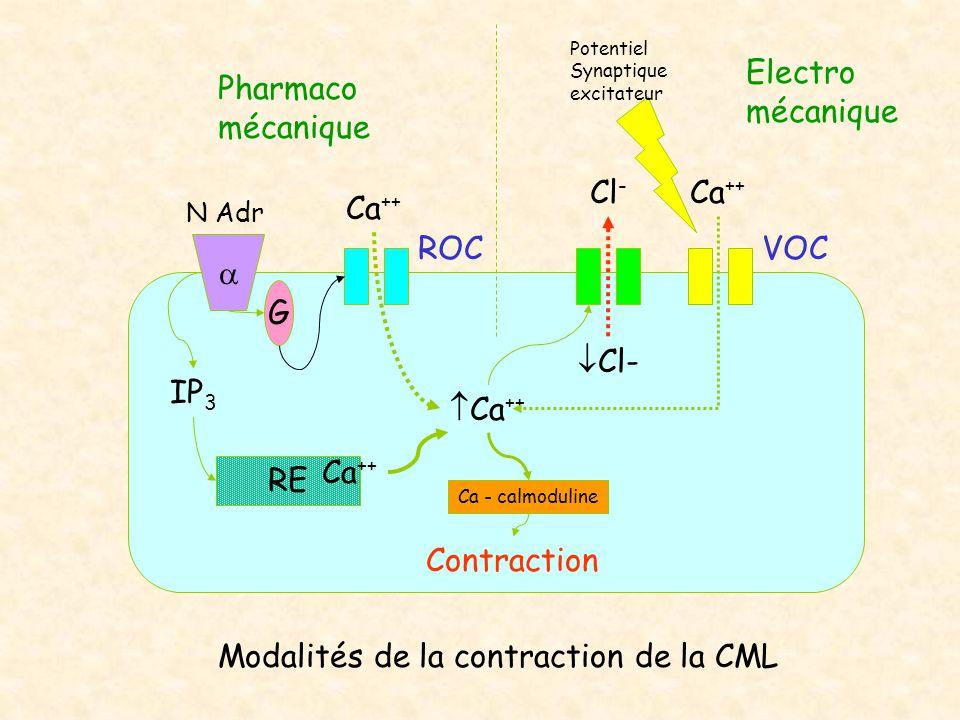 Modalités de la contraction de la CML