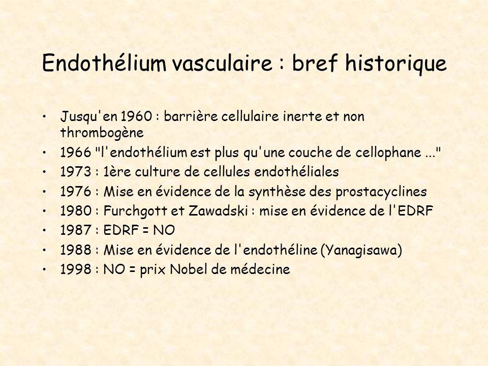 Endothélium vasculaire : bref historique