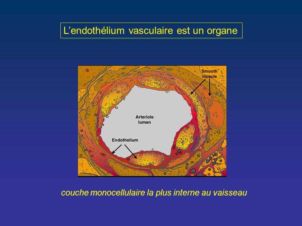 L'endothélium vasculaire est un organe