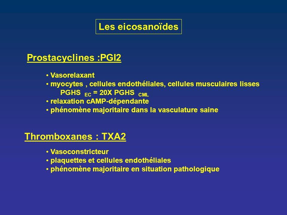 Les eicosanoïdes Prostacyclines :PGI2 Thromboxanes : TXA2 Vasorelaxant