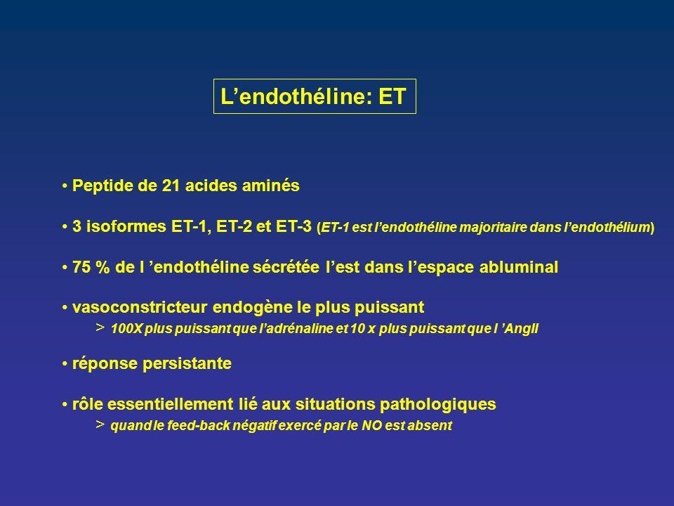 L'endothéline: ET Peptide de 21 acides aminés