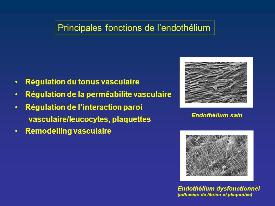 Principales fonctions de l'endothélium