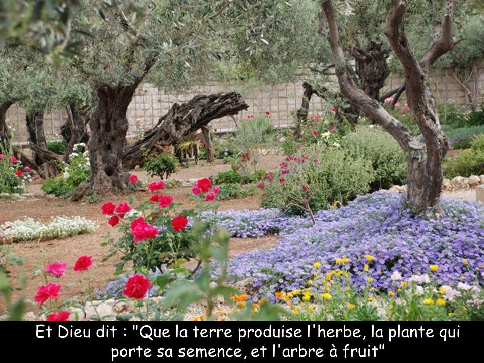 Et Dieu dit : Que la terre produise l herbe, la plante qui porte sa semence, et l arbre à fruit