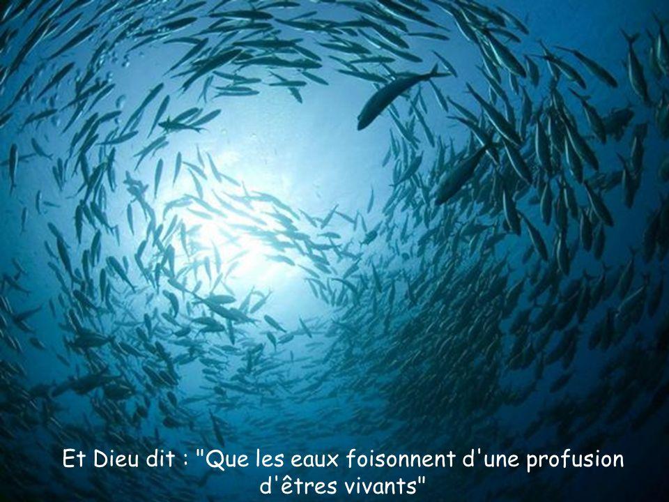 Et Dieu dit : Que les eaux foisonnent d une profusion d êtres vivants