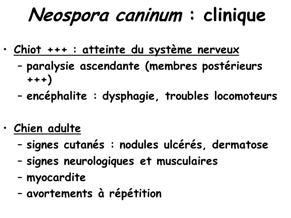 Neospora caninum : clinique