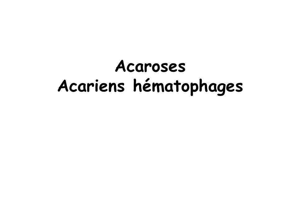 Acaroses Acariens hématophages