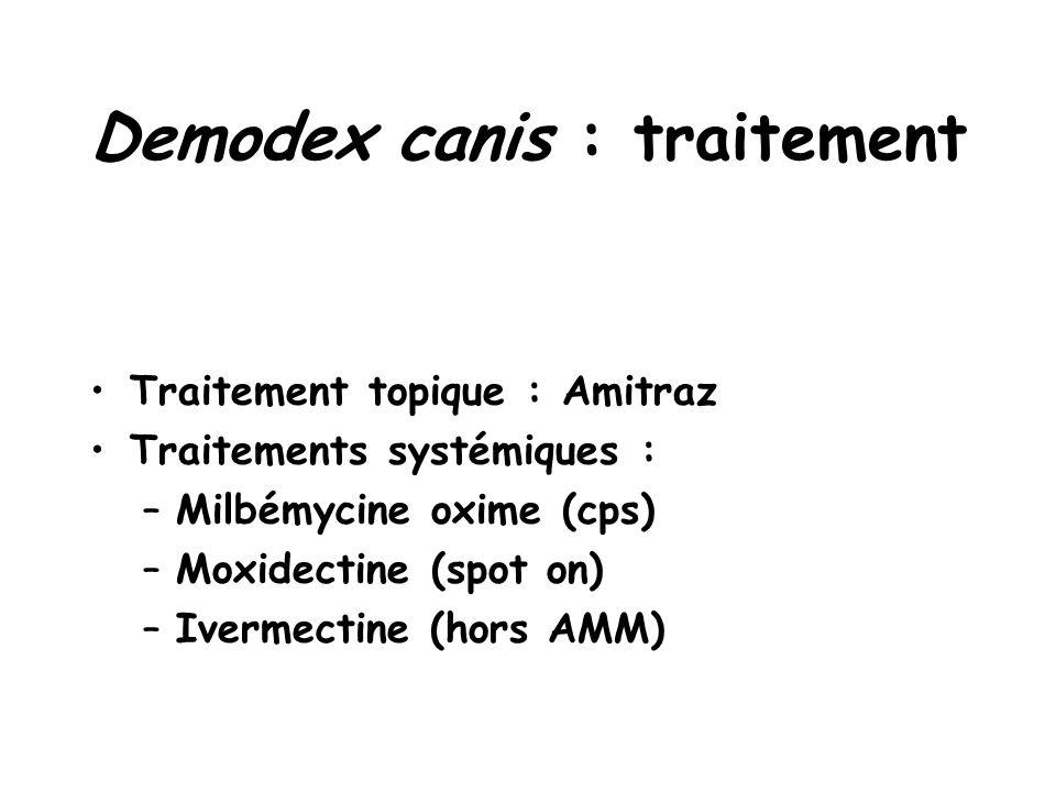 Demodex canis : traitement
