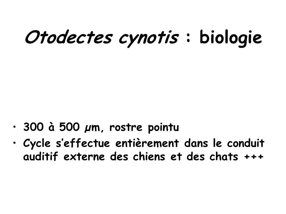 Otodectes cynotis : biologie