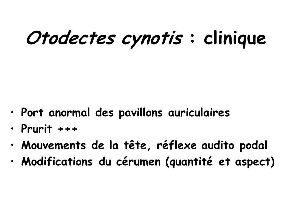 Otodectes cynotis : clinique