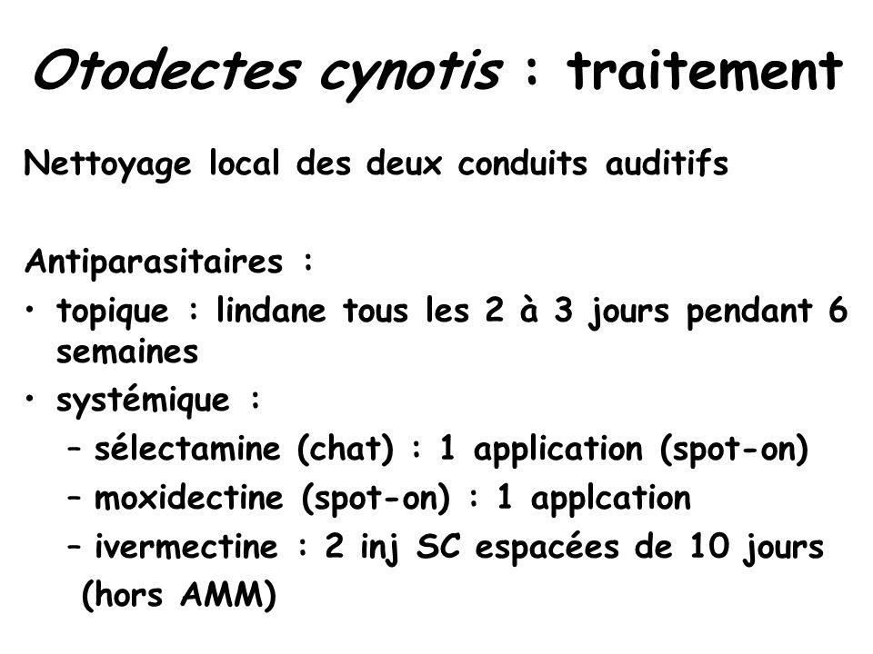 Otodectes cynotis : traitement