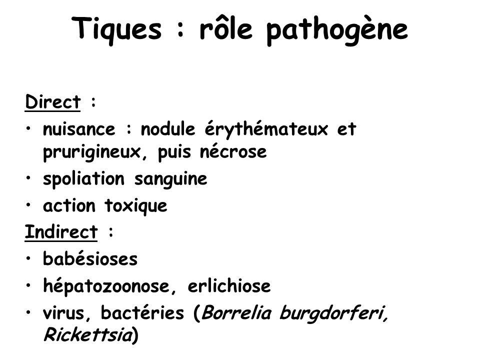 Tiques : rôle pathogène