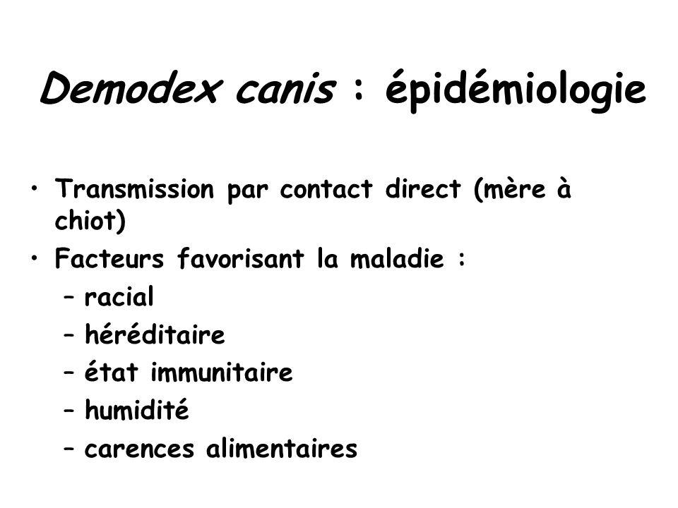 Demodex canis : épidémiologie