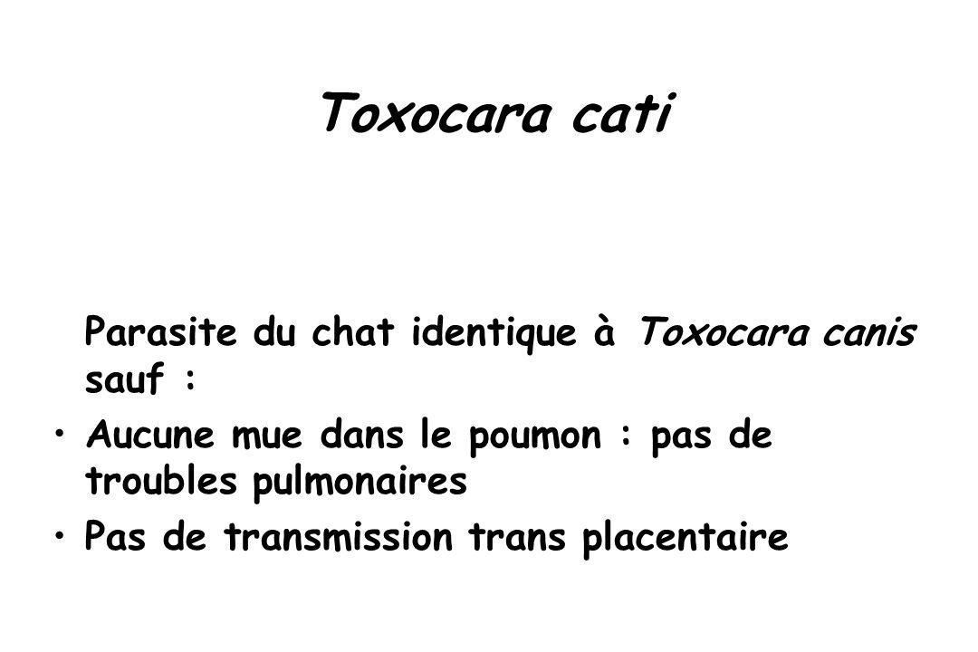 Toxocara cati Parasite du chat identique à Toxocara canis sauf :