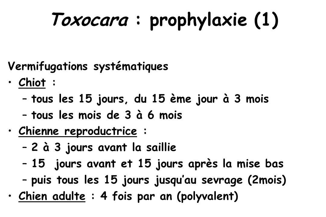 Toxocara : prophylaxie (1)