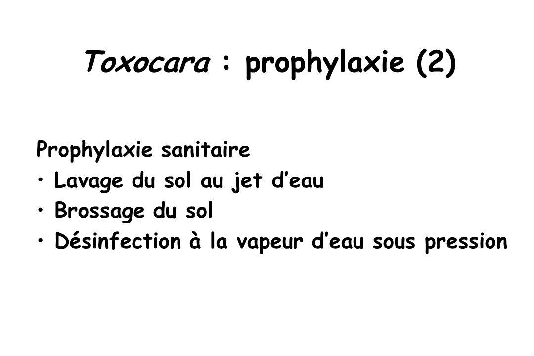 Toxocara : prophylaxie (2)