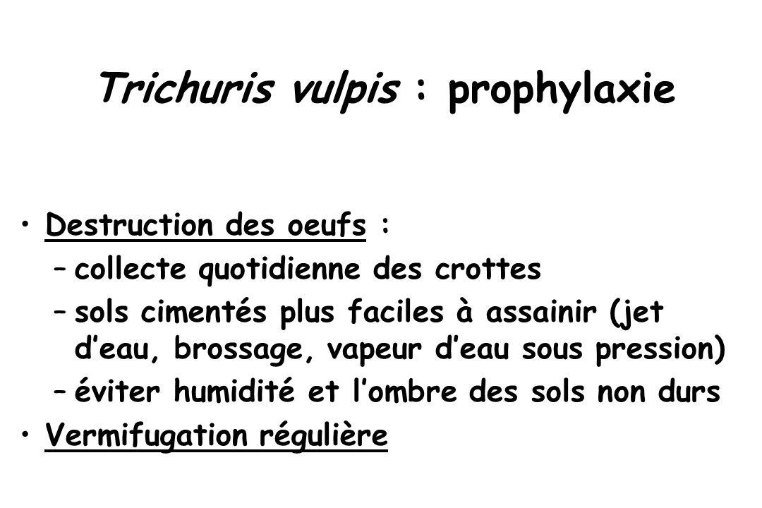 Trichuris vulpis : prophylaxie