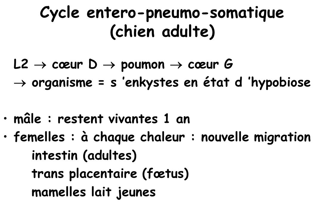Cycle entero-pneumo-somatique (chien adulte)