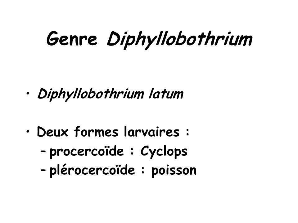 Genre Diphyllobothrium