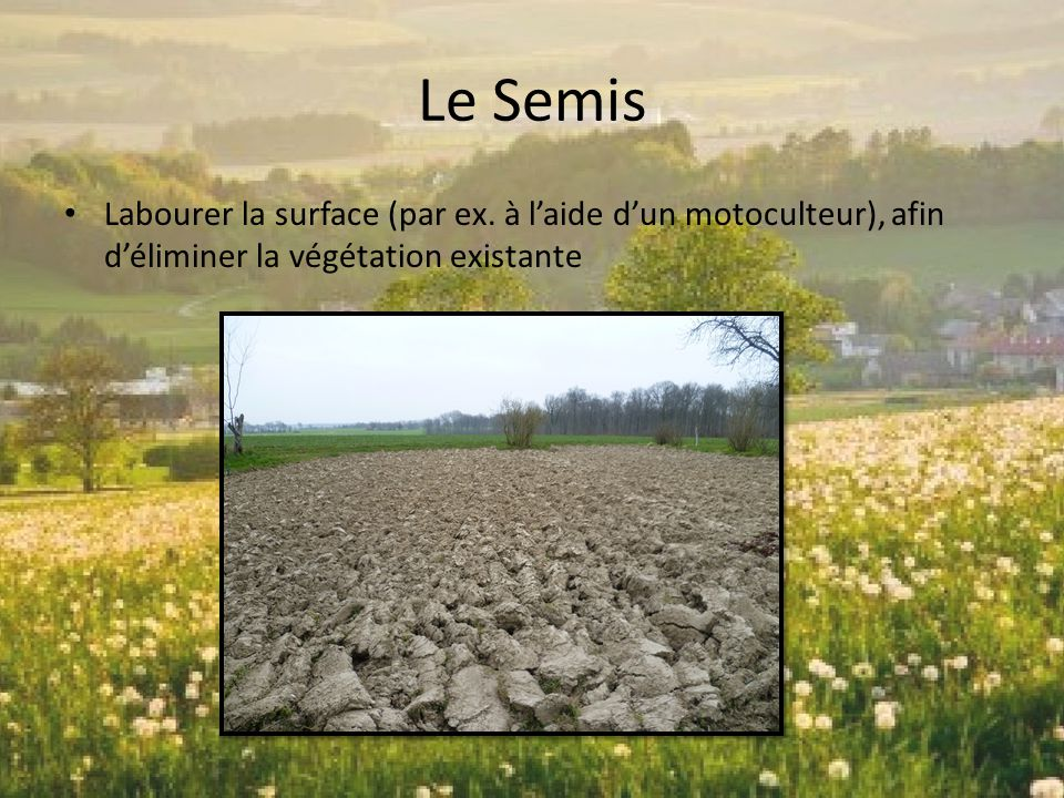 Le Semis Labourer la surface (par ex.
