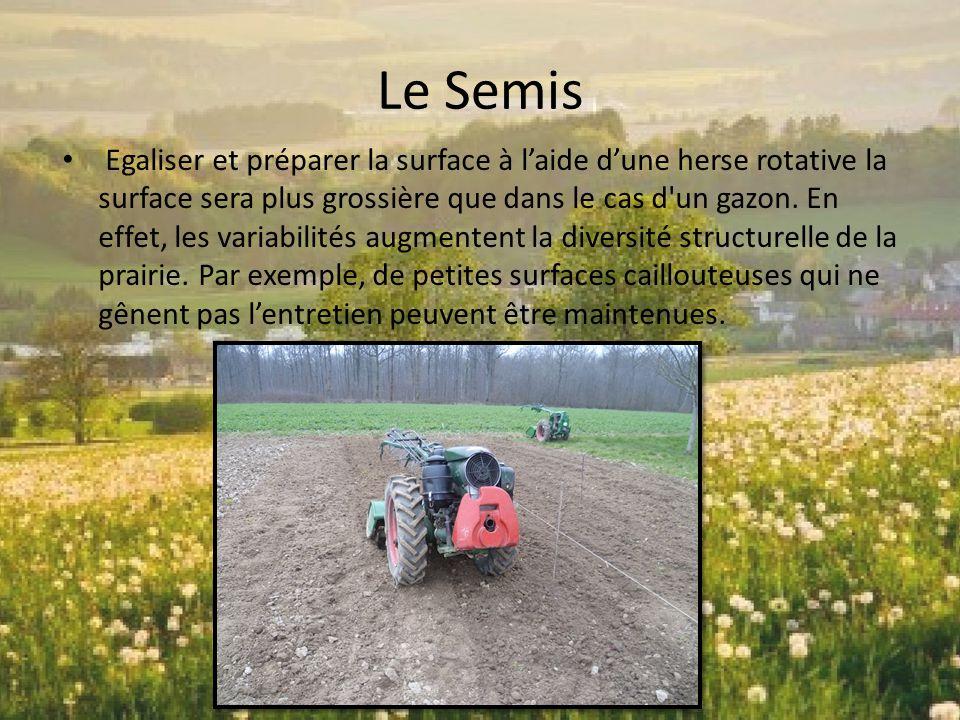 Le Semis