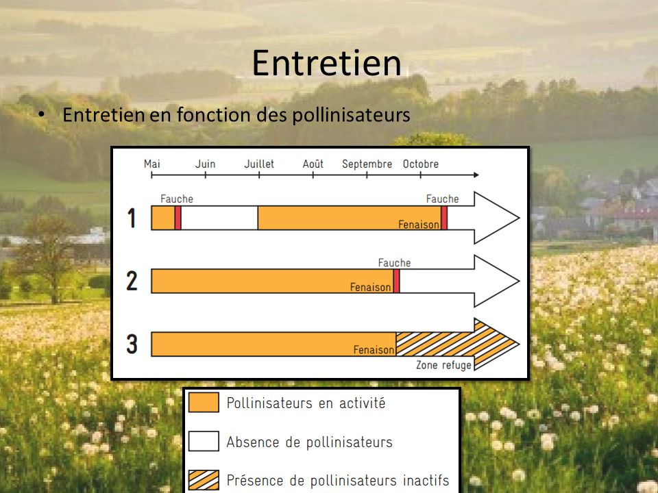 Entretien Entretien en fonction des pollinisateurs