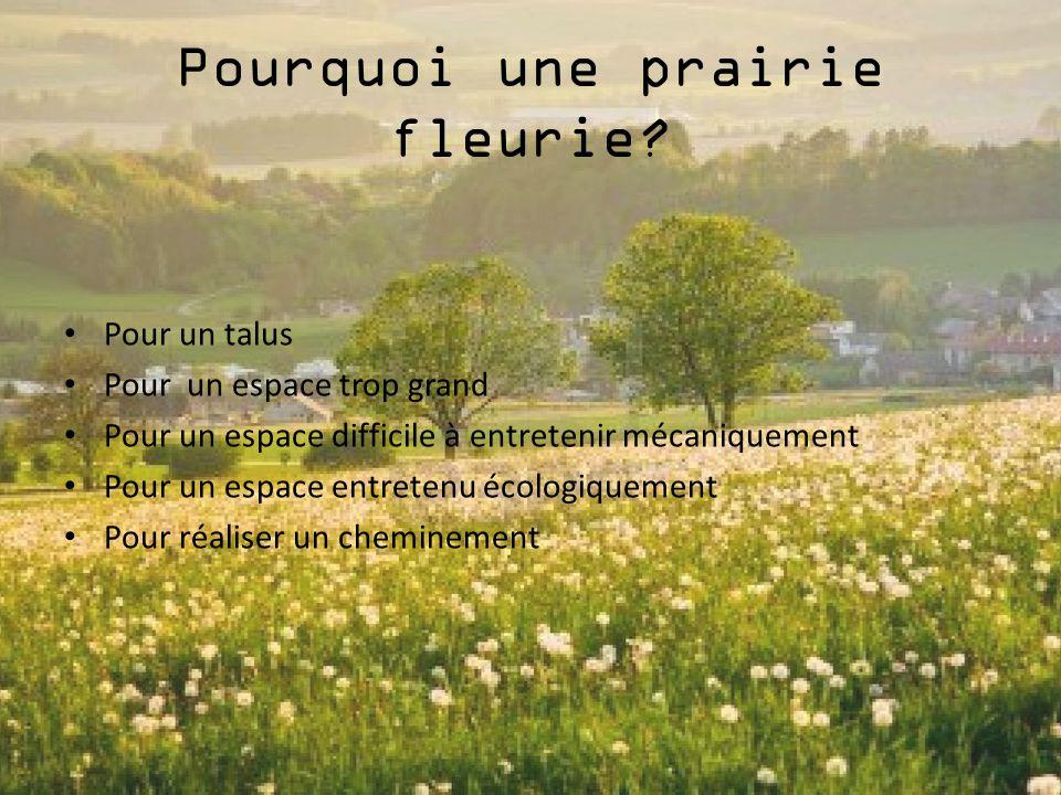 Pourquoi une prairie fleurie