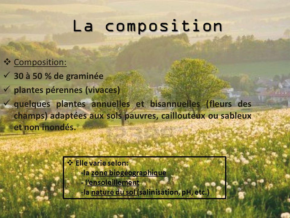 La composition Composition: 30 à 50 % de graminée
