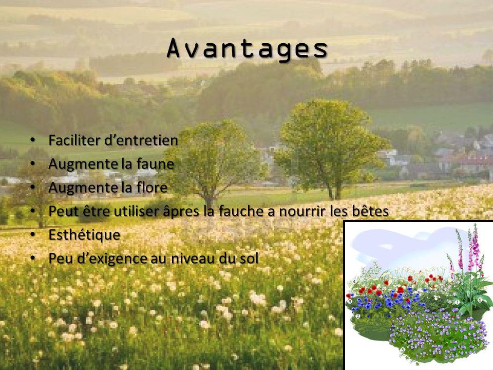 Avantages Faciliter d'entretien Augmente la faune Augmente la flore