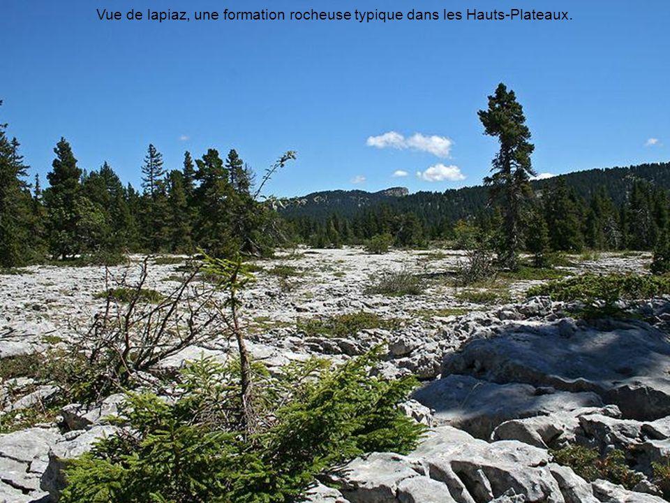 Vue de lapiaz, une formation rocheuse typique dans les Hauts-Plateaux.