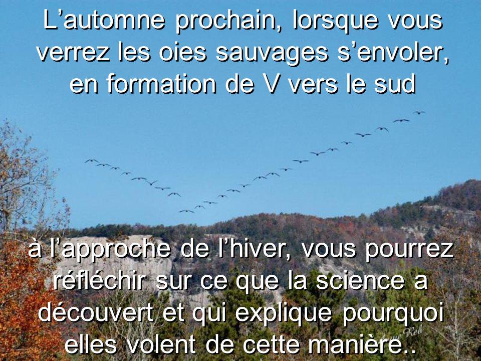 L'automne prochain, lorsque vous verrez les oies sauvages s'envoler, en formation de V vers le sud