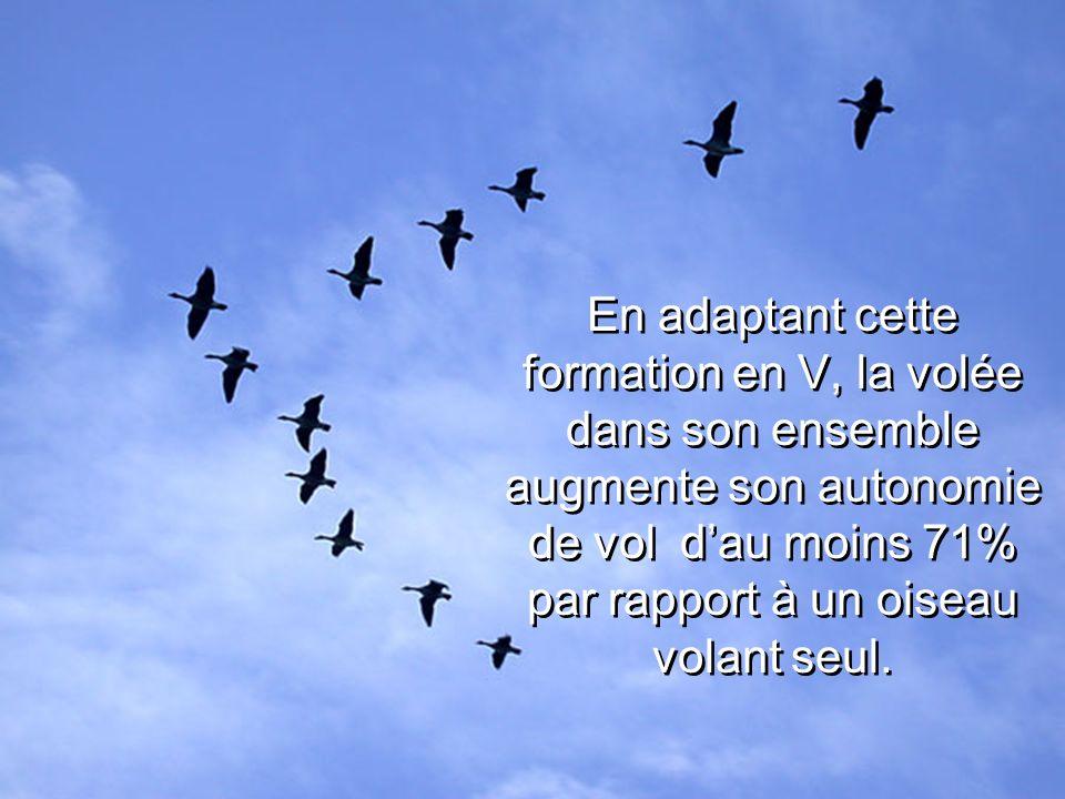 En adaptant cette formation en V, la volée dans son ensemble augmente son autonomie de vol d'au moins 71% par rapport à un oiseau volant seul.
