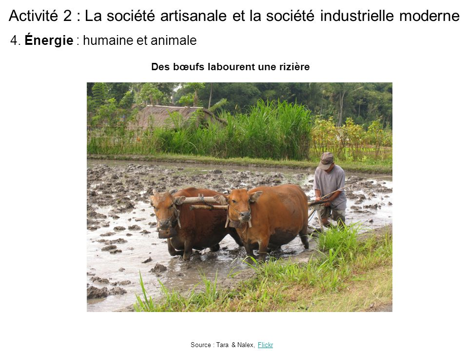 Activité 2 : La société artisanale et la société industrielle moderne