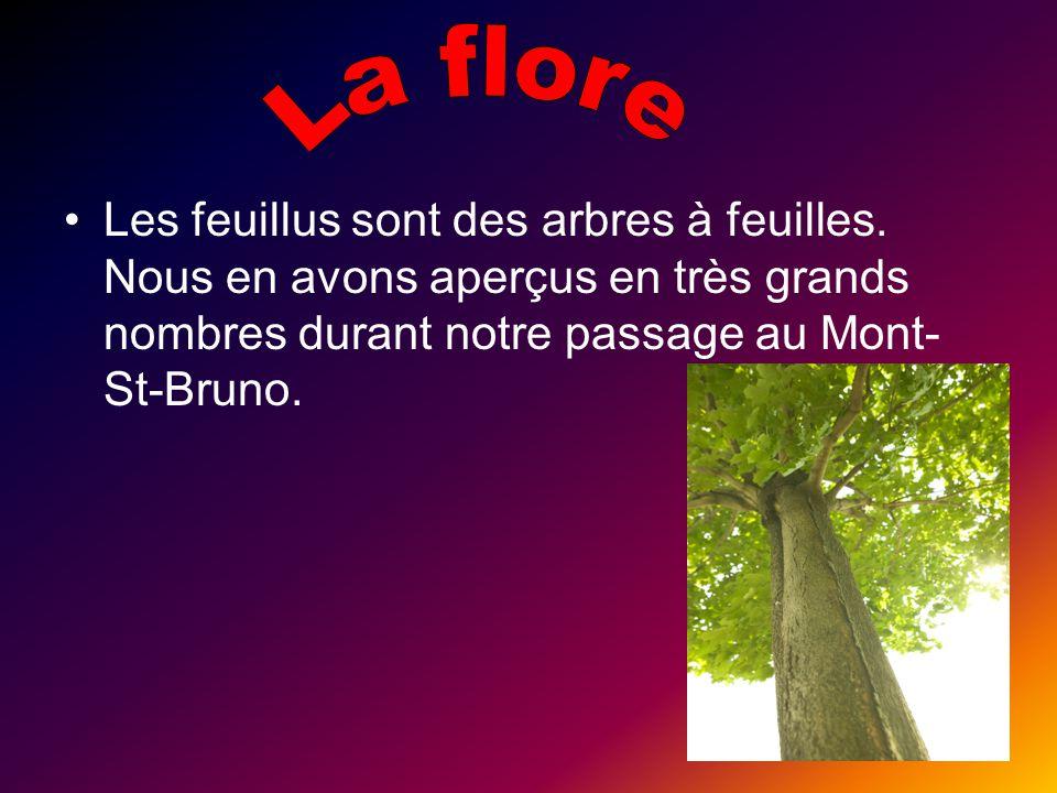 La flore Les feuillus sont des arbres à feuilles.