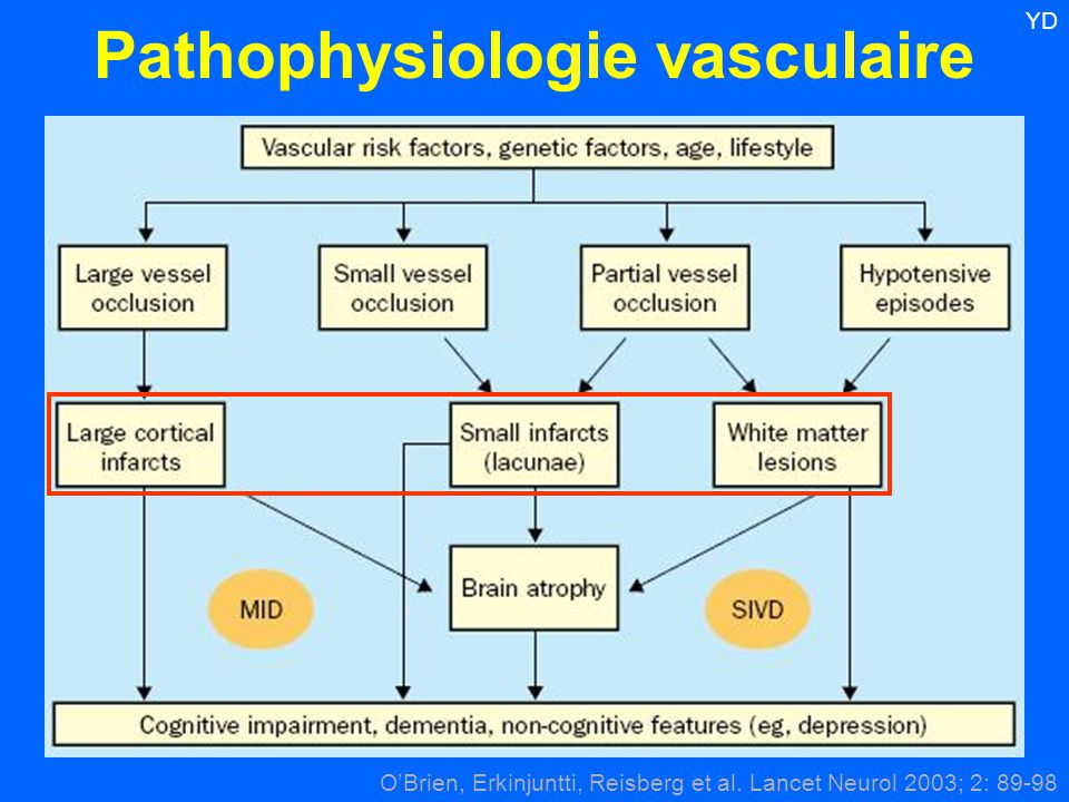 Pathophysiologie vasculaire