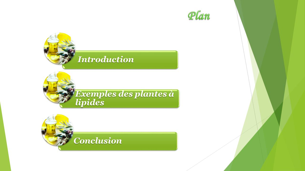 Plan Introduction Exemples des plantes à lipides Conclusion
