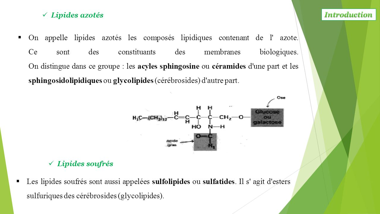Lipides azotés Introduction.