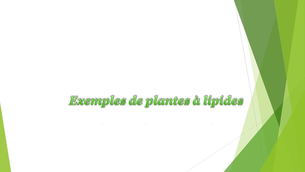 Exemples de plantes à lipides