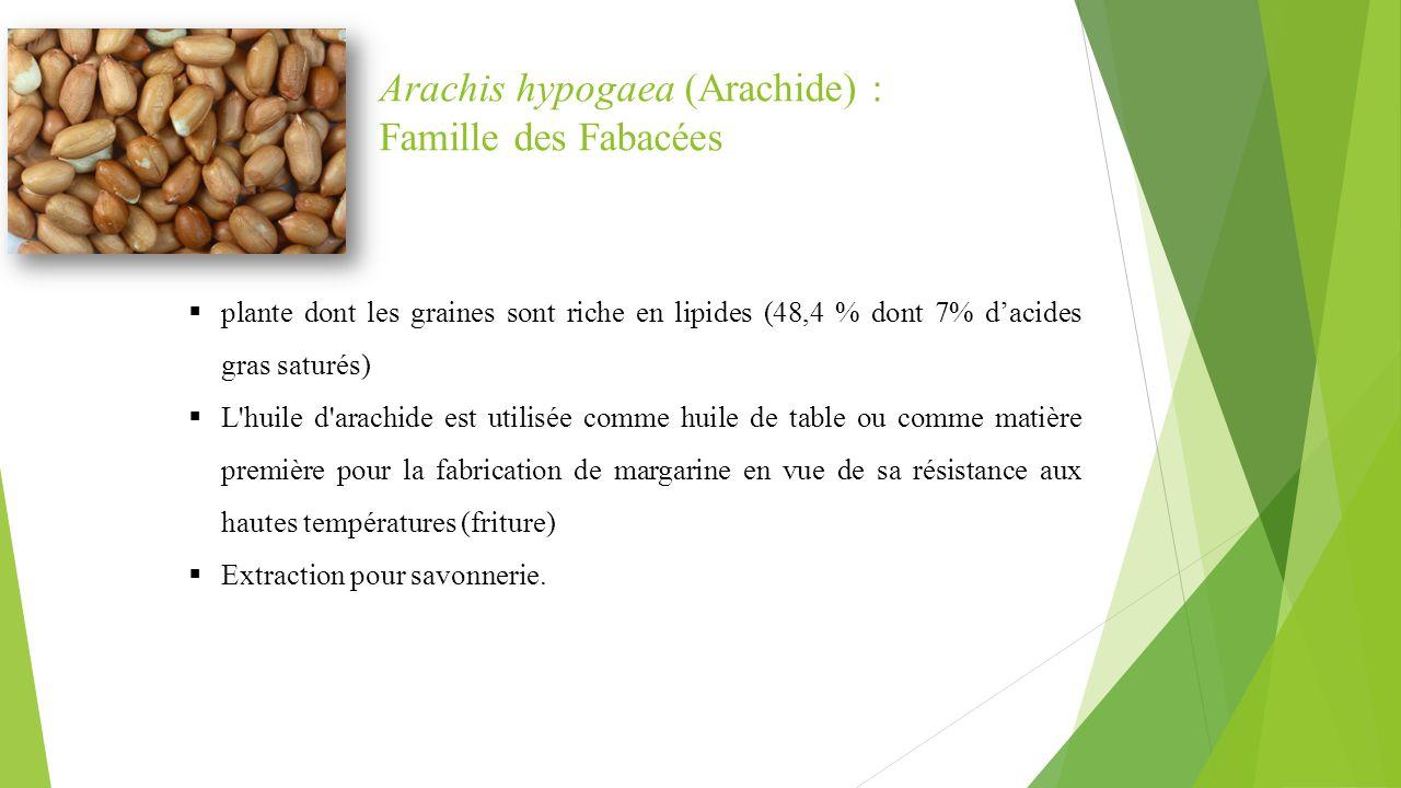 Arachis hypogaea (Arachide) : Famille des Fabacées