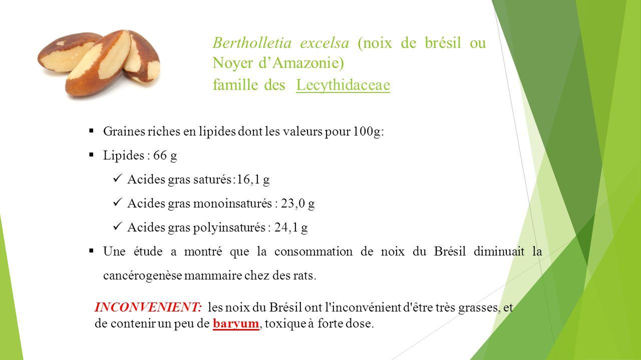 Bertholletia excelsa (noix de brésil ou Noyer d'Amazonie)